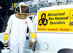 Africanized Bee Removal Arizona