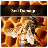 service-bee-damage