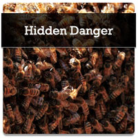 service-hidden-danger